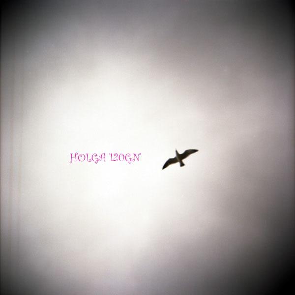 HLG-20090300009.jpg