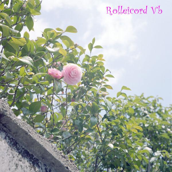 Rollei-20090411-PRO400H-001a.jpg